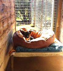 Pet accommodation - Relaxing-in-the-sun